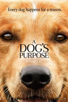 A Dog\'s Purpose - หมา เป้าหมาย และเด็กชายของผม