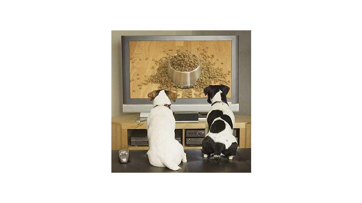 รายการทีวี เพื่อหมาที่คุณรัก
