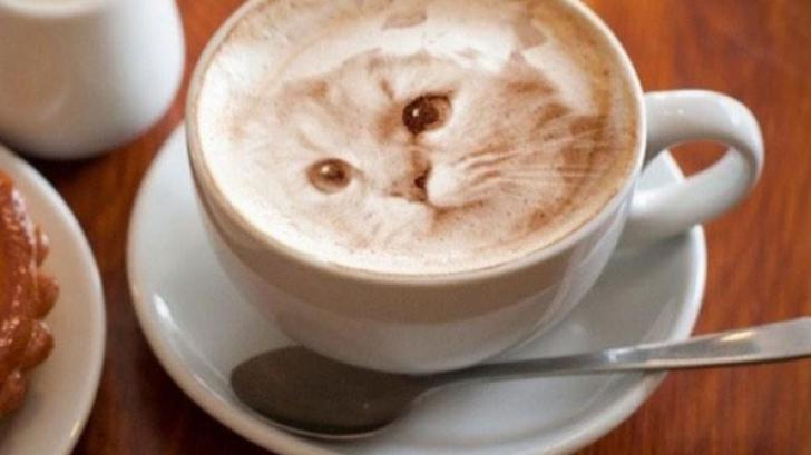 แมวบนฟองนม Cat Latte Art สุดสวยที่น่ารักจนเสียดายที่จะดื่ม