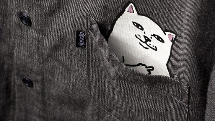 Pocket Cat เสื้อลายแมวสุดชิค สำหรับคนที่ชอบกวนทีน