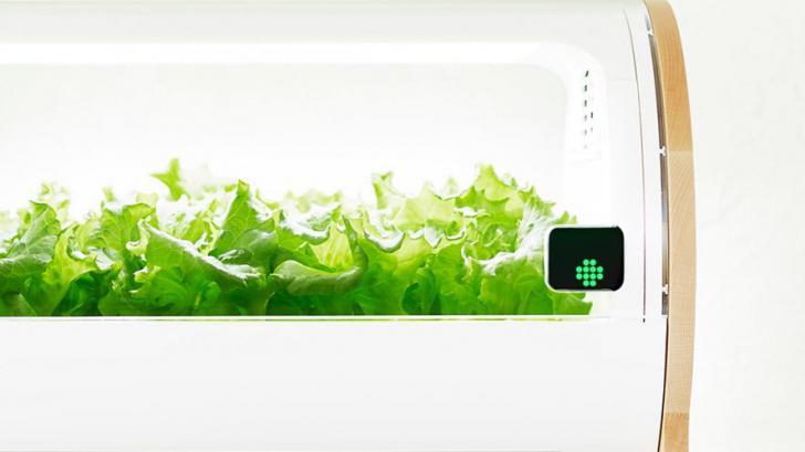Foop เครื่องปลูกพืชอัตโนมัติ ที่ทำให้เราปลูกผักไว้ทานเองในห้องครัวได้อย่างง่ายๆ