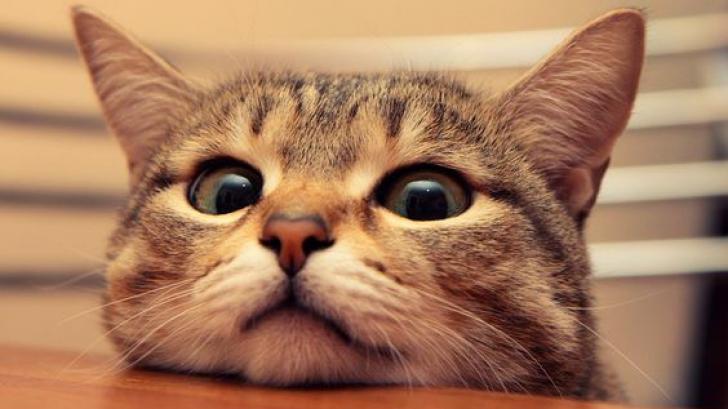 ผลสำรวจชี้ชัด! การดูภาพแมวนั้นดีต่อใจ และก็ไม่ทำให้เราเป็นคนขี้เกียจ (เหมือนแมว) แต่อย่างใด