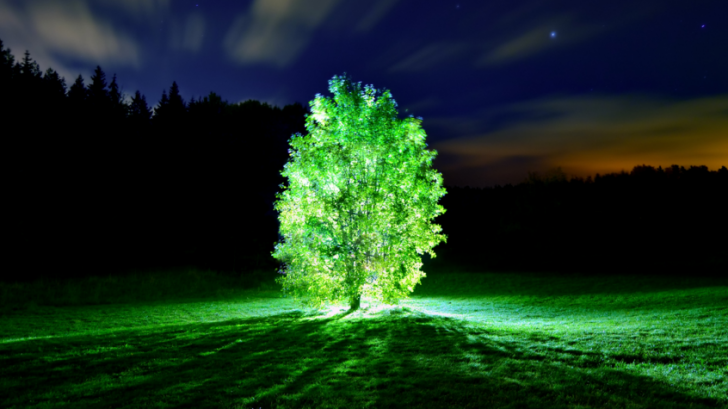 MIT สร้างต้นไม้ที่สามารถเรืองแสงได้เหมือนหลอดไฟ แถมยังใช้แทนแสงไฟส่องถนนได้ด้วย