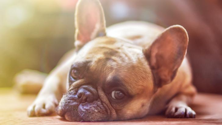 เข้าใจเสียใหม่ สุนัขแก่เร็วตายเร็วกว่าเราก็จริง แต่มันไม่ได้แก่เร็วเป็น 7 เท่าของมนุษย์แต่อย่างใด