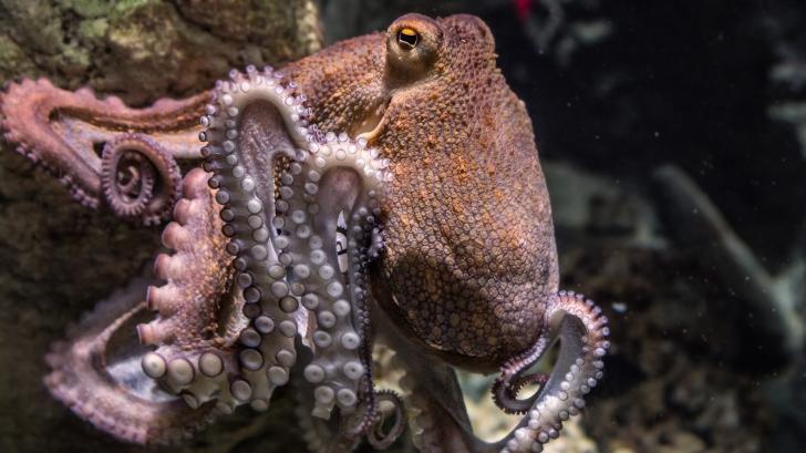นักวิทยาศาสตร์เสนอแนวคิด ปลาหมึก อาจเป็นสิ่งมีชีวิตจากนอกโลก