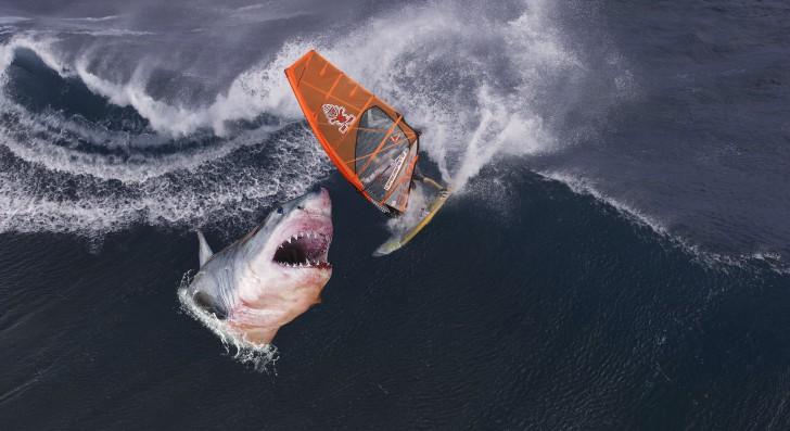 ชายอายุ 61 รอดตายราวปาฏิหาริย์ จากเหตุโดนฉลามยักษ์กัด ด้วยวิธีการที่ไม่มีใครคาดคิด