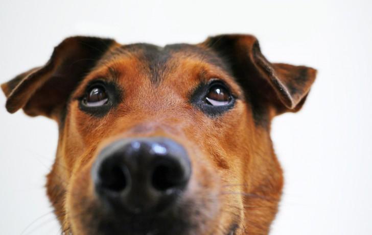 สตาร์ทอัพหัวใส ปิ๊งไอเดียเอา หนอน มาทำเป็นอาหารน้องหมา แก้ปัญหาสิ่งแวดล้อมได้มากอยู่