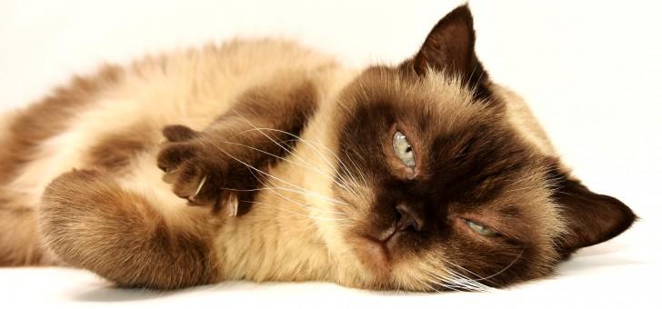 น้องแมว ไม่ใช่สัตว์ที่โลกส่วนตัวสูงอย่างที่เราเข้าใจ งานวิจัยล่าสุดชี้ชัด