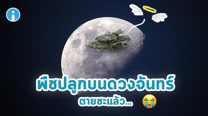 ดีใจไม่ทันข้ามวัน ล่าสุดต้นไม้ที่จีนลองปลูกบนดวงจันทร์ ตายเรียบ
