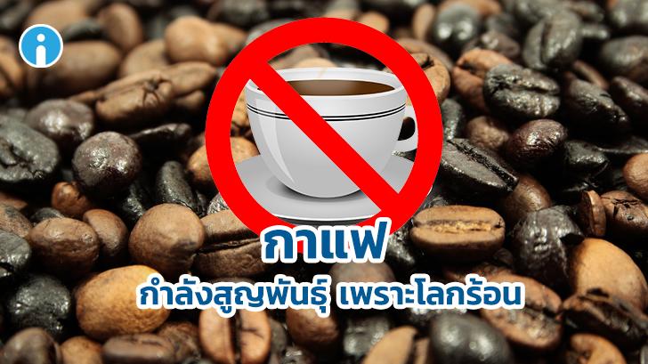 ไม่รู้ว่าเมื่อไหร่กาแฟแก้วสุดท้ายจะมาถึง เมื่อนักวิจัยยืนยันว่ากาแฟใกล้จะสูญพันธุ์จากโลก