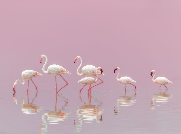 National Geographic ได้เลือกภาพถ่ายที่ดีที่สุดในปี 2018 มาให้รับชมกัน
