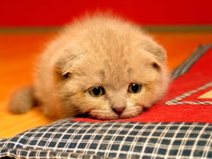 16 น้องแมวน้องหมาเหงาๆ ที่ต้องการอ้อมกอดของมนุษย์มากกว่าสิ่งใดๆ ในโลก