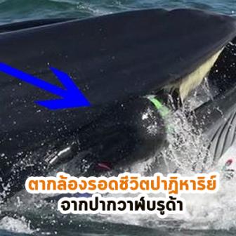 ตากล้องรอดชีวิตปาฏิหาริย์  จากปากวาฬบรูด้า!!! เหมือนตายแล้วเกิดใหม่จากอุบัติเหตุที่เกิดยาก