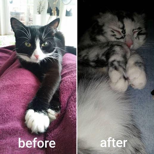 แมวอะไรหว่า เปลี่ยนสีขนตัวเองจากดำเป็นขาว ก็ได้ด้วย?