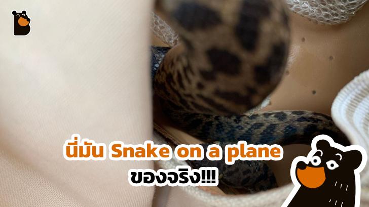 งูอยู่บนเครื่องบินของจริง มาแล้วจ้า ยังดีที่เป็นงูที่สงบเสงี่ยมและไม่มีพิษ
