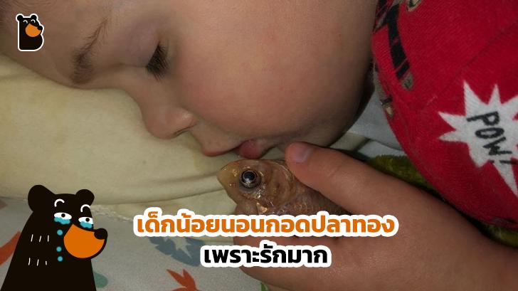 หนุ่มน้อยทำร้ายปลาทองสุดที่รักของตัวเองโดยไม่ได้ตั้งใจ เพียงเพราะว่าเอาปลามานอนกอด