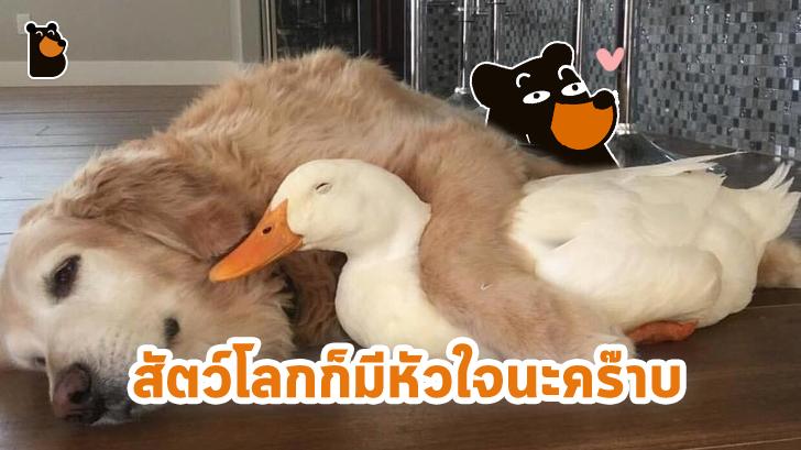 อบอุ่นหัวใจ กับภาพของ 23 สัตว์โลก ที่รู้จักวิธีแสดงความรักต่อผู้อื่น