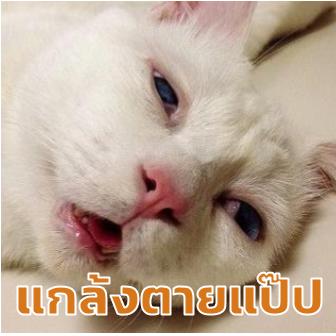หยุดต่อเลยได้ไหม อย่าเพิ่งปล่อยให้ฉันไป... รวม 14 ภาพหมาแมว ที่ถ่ายทอดอารมณ์ได้ดีมากๆ