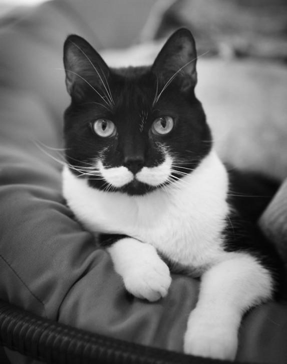 รวม 21 ภาพน้องหมาน้องแมว และสัตว์อื่นๆ อีกมากมาย ที่มีลวดลายแปลกๆ โดยธรรมชาติ