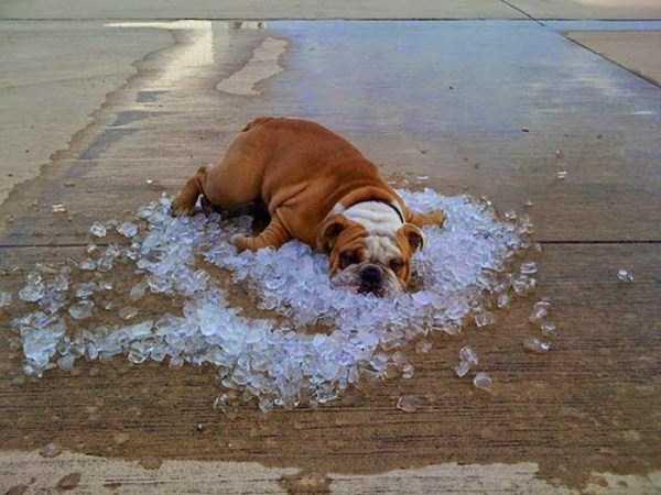 นี่มันหน้าร้อน หรือซ้อมตกนรก! กับ 26 ภาพที่ไม่น่าเชื่อว่าอากาศร้อนจะโหดร้ายถึงเพียงนี้