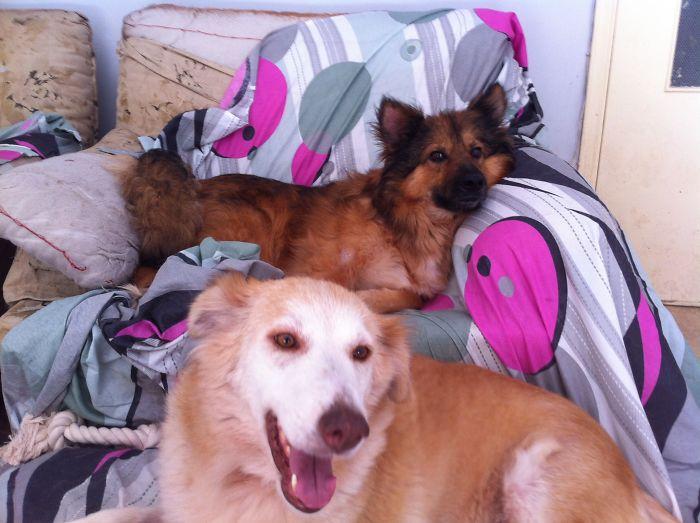 ความรักคือทุกสิ่ง... เปลี่ยนจากสุนัขข้างถนนในสภาพย่ำแย่ ให้กลายเป็นน้องหมาสุดน่ารัก