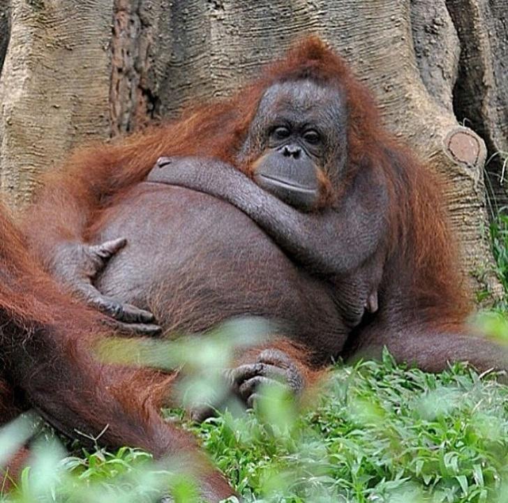 22 ภาพสัตว์โลกน่ารักที่มีความเป็นแม่ ตั้งท้องอ้วนตุ้ยนุ้ย ก่อนให้กำเนิดลูกน้อย