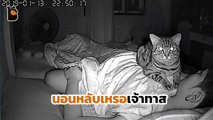 สะเทือนใจหนักมาก เมื่อมนุษย์ตั้งกล้องส่องว่า เจ้าแมวทำอะไรกับเขาบ้างตอนกลางคืน...