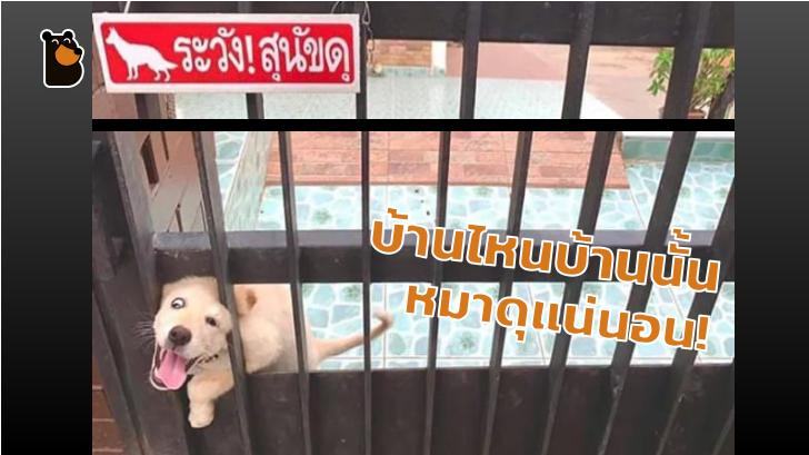 13 ภาพที่จะยืนยันว่า ป้าย ระวังสุนัขดุ! เป็นป้ายเตือนที่ศักดิ์สิทธิ์ที่สุดในโลก (จริงๆ นะ)