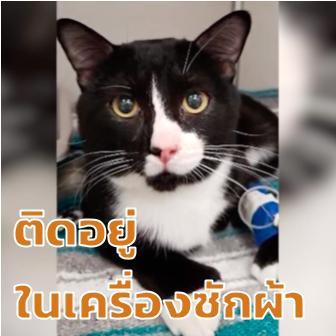 เจ้าแมว Felix โชคไม่ดี เหลือ 8 ชีวิตเพราะติดในเครื่องซักผ้า!