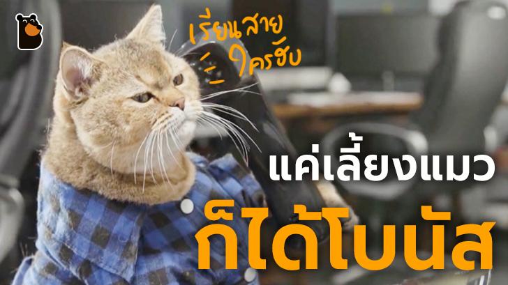 บริษัทไอทีในญี่ปุ่นให้เงินโบนัสเป็นพิเศษทุกเดือน หากว่าพนักงานเลี้ยงแมว